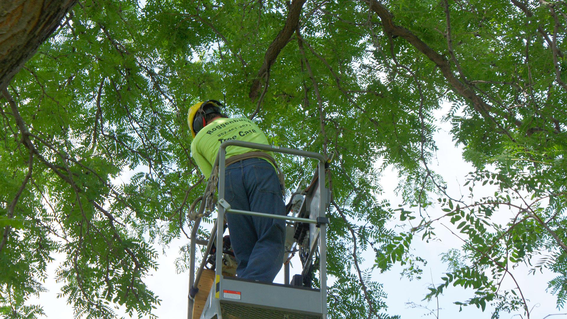 Roggenbuck Tree Care staff at work